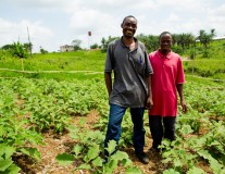 Male farmers are up to 3 times more productive than female farmers